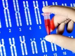 Можно ли сделать ДНК на отцовство во время беременности: инвазивный и неинвазивный пренатальный тест