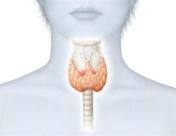 После операции на щитовидке сколько на больничном держат в стационаре и дома